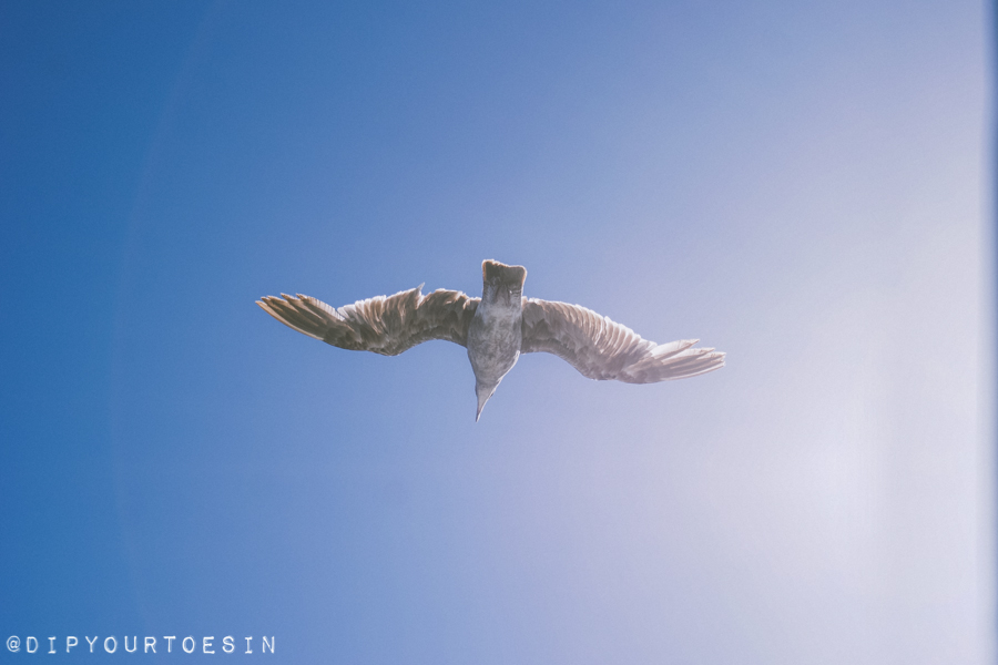 Malibu Seagulls | Visiting Los Angeles? Easy Itinerary Suggestions for the Chilled-Out Traveller