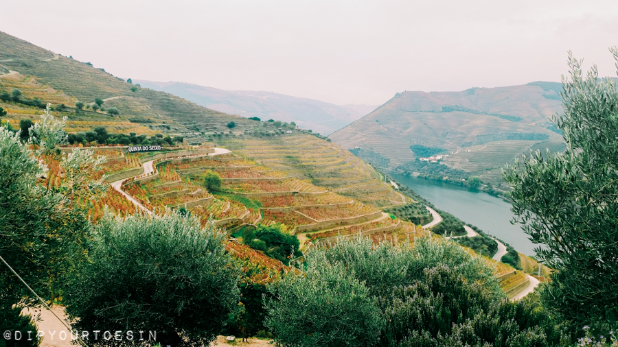 Douro Valley wine terraces | Why you should visit Porto